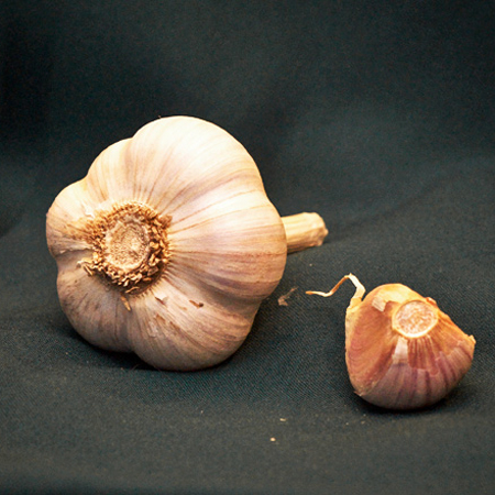 image of music garlic