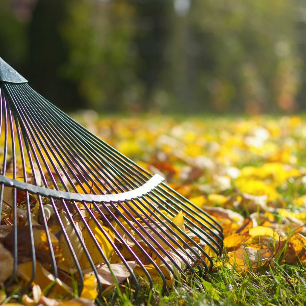 fall clean up services raking